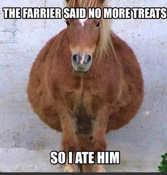 Fat horses cost more to keep