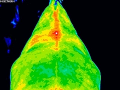 How Thermology Is Influencing The Veterinary Industry And The Horse Owner's Approach To Lameness Investigation – part 1